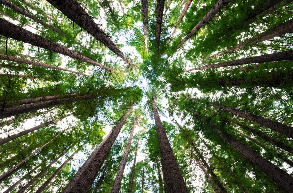 Comment investir dans un arbre pour le climat ?